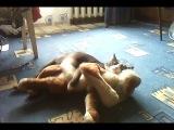 Кот извращенец,бедная игрушка мне ее жалко